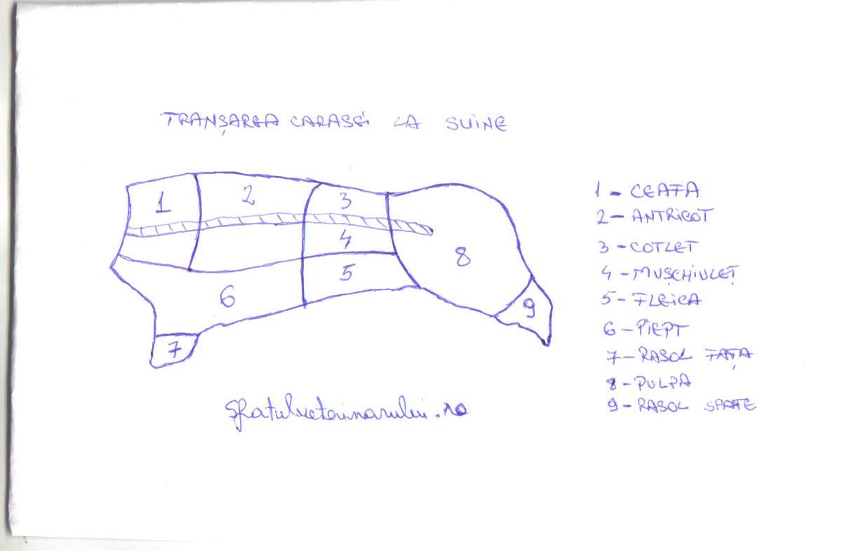transarea carcasei de suine | sfatulveterinarului.ro